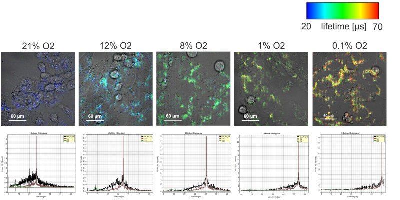 The use of PLIM for live intracellular oxygen measurement in vitro