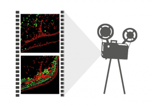 Image rapidFLIM (Fluorescence Lifetime Imaging) NEW