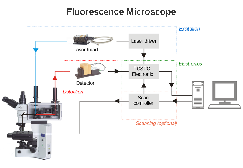 General layout of a fluorescence scanning microscope