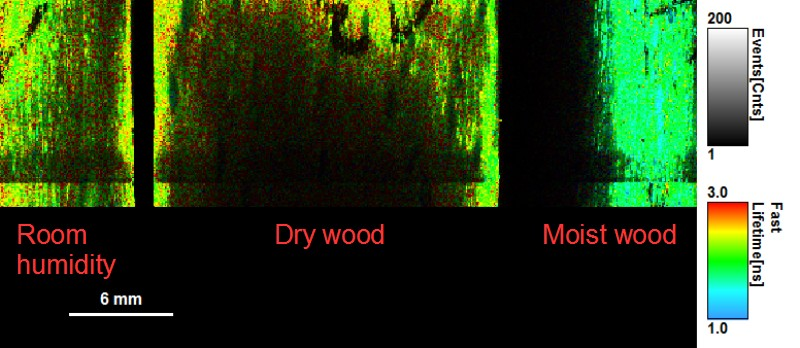 FLIM image of wood autofluorescence at different dryness stages