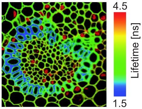 Measurement of Cell Membrane Fluidity by Laurdan GP: Fluorescence Spectroscopy and Microscopy