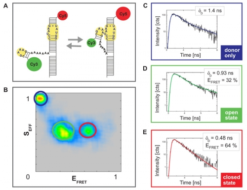 Monitoring Mg2+ driven RNA folding of a tetraloop receptor by PIE-FRET