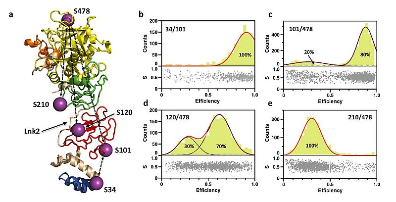 Protein structure with FRET couples and obseverd FRET efficiencies