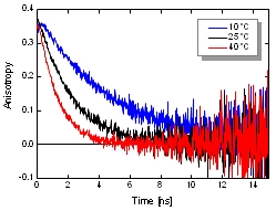 Fluorescence Anisotropy (Polarization)