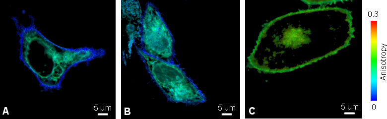 Anisotropy imaging to study oligomerization of viral membrane proteins