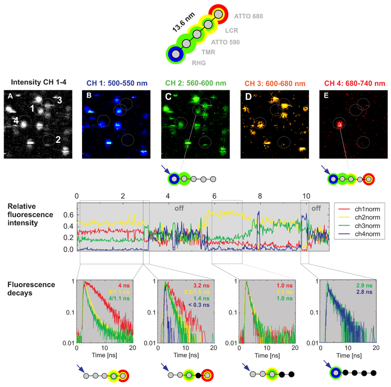 Multistep FRET analysis in a photonic wire based on rigid DNA stained with five different dyes