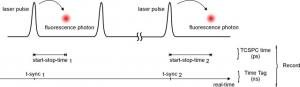 scheme: T3 mode of the PicoHarp 300 | PicoHarp 300